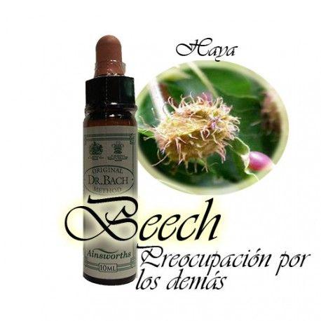 Beech - Haya 10 ml.
