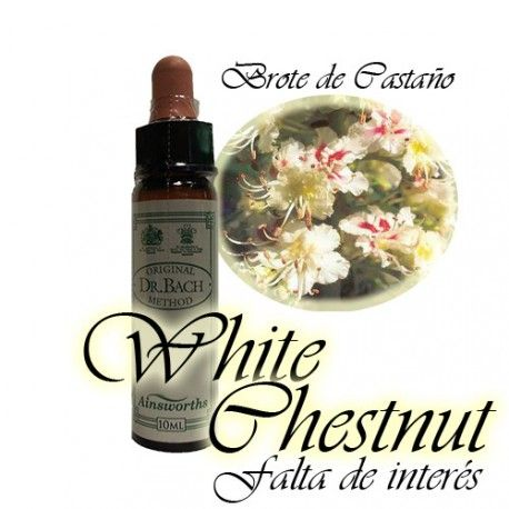 White Chestnut - Brote de Castaño 10 ml.