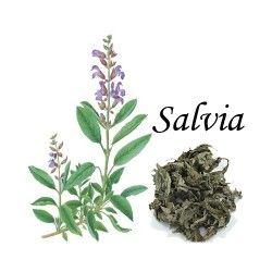 Salvia Caja 20 Bolsitas