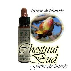 Chestnut Bud - Brote de Castaño 10 ml.