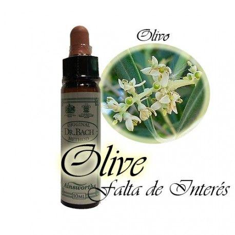 Olive - Olivo 10 ml.