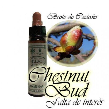 Chestnut Bud - Brote de Castaño 10 ml.